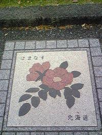 Image428